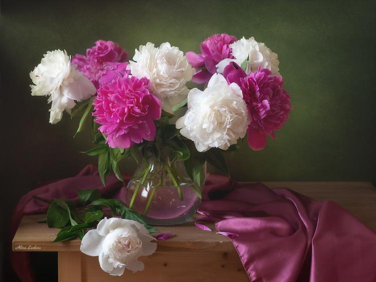 Натюрморт с цветами пионы
