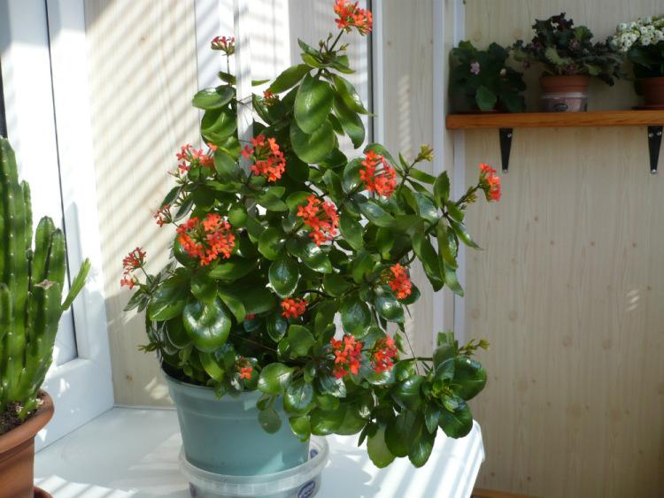 Фото разные комнатные цветы